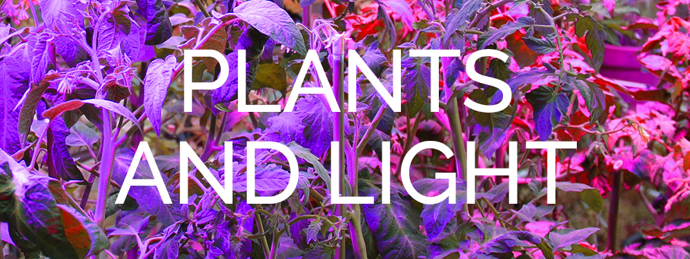 Horticoled-Plants-and-light-HD