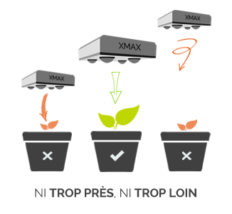 Distance LED plantes - Ni trop près, ni trop loin